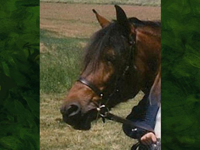 Shiloh the horse.