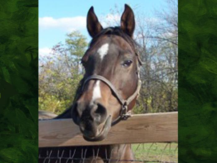 Reina Cyn the horse.