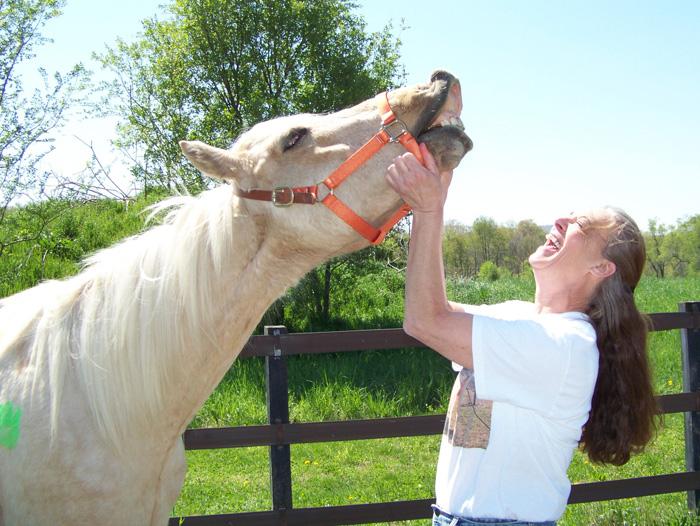 Skipper horse.