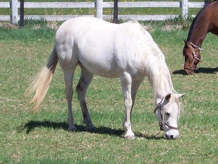 Tiara the horse.